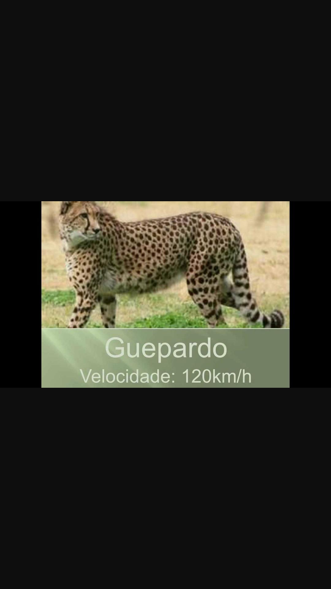 Capa - Os animais mais rápido do mundo