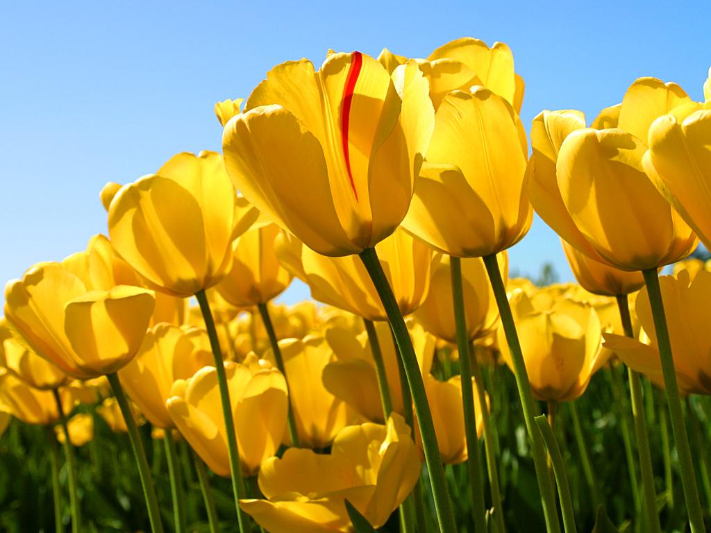 Capa - Amo rosas e flores