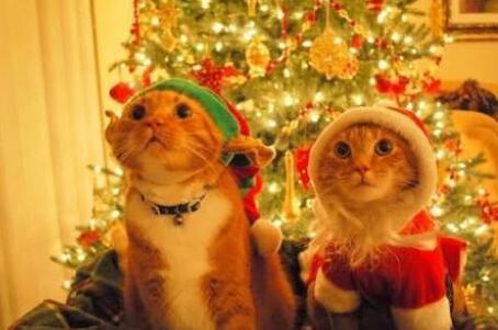 Capa - Especial de natal!